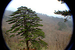 "Tuanjiesong. this may just look like a pine tree, but the plaque says ""It is thrive with five trunks circuited, which implies national unity. Comrade Jiangzemin sings the song Unity is Strenght with the party before the pine."" - mt. huangshan (yellow mountain)"