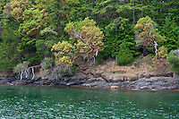 WASJ_D185A - USA, Washington, San Juan Islands, Orcas Island, Forest of Douglas fir and Pacific madrone above rocky shoreline at West Beach.