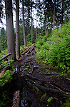 Track in the forest showing tree roots.             Deep Cove,Vancouver, British Columbia, Canada