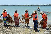 TANZANIA, Zanzibar, village Muungoni, due to climate change and rising water temperatures seaweed farmer have shifted to red algae farming in deep water, harvest of red algae