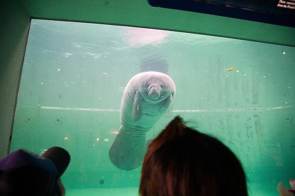 The Mantatee House at the Okinawa Churaumi Aquarium at Ocean Expo Park.