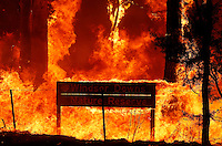 A sign burns during a bushfire near Sydney September 10, 2013. The Australian bushfire season has started early and is predicted to be a busy one as record high temperatures, strong winds and dry weather hit most of the country. Stringer/VIEWPRESS