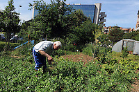 Orti in città. Vegetable Gardens in the city..Casale Il Podere Rosa.
