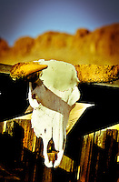 Skull on Old Shack - Arizona<br />
