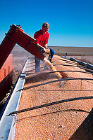 Farmer overseeing corn harvest in Colorado.