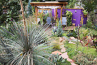 A yucca seems to guard the path to Dan Johnson's purple walled deck in his back yard garden in Denver,Colorado