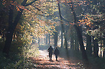 Couple walking dog on a misty autumnal woodland path