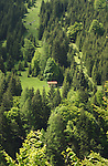 Cow shelter,surrounded by evergreen pine trees in the picturesque district of Imst, Tyrol,Tirol, Austria.