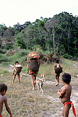 Roraima, Brazil.  Yanomami with baskets, dogs and children walking.