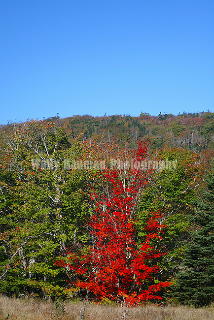 Images of The Canadian Maritime Provinces of Nova Scotia and Prince Edward Island. Autumn splenor.