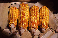 Carmo da Cachoeira_MG, Brasil...Detalhe de espiga de milho...A corn spike detail...Foto: LEO DRUMOND / NITRO