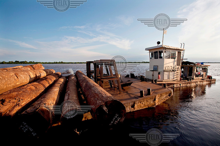 Tree trunks being transported on the Congo River.