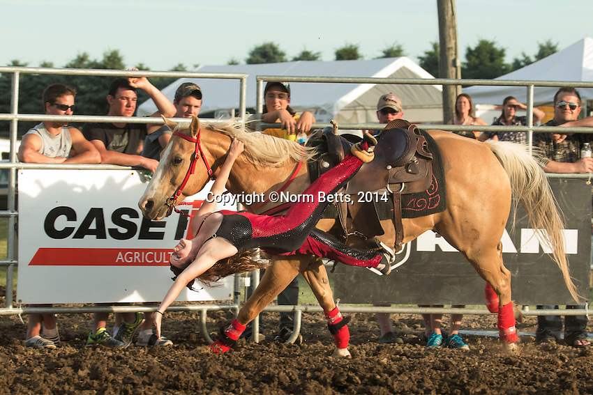 RODEO<br /> Images from the  2014 CASE IH Ultimate  Rodeo tour in Pain Court/Chatham, Ontario.<br /> photos by Norm Betts <br /> &copy;2014, Norm Betts<br /> tel 416 460 8743
