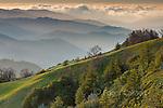 Last Light, Ventana Wilderness, Los Padres National Forest, Big Sur, Monterey County, California