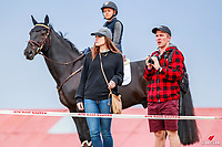 The best way to view the CIC2* Eventing Cross Country. 2018 NZL-Horse of the Year Show. Hastings. Saturday 17 March. Copyright Photo: Libby Law Photography