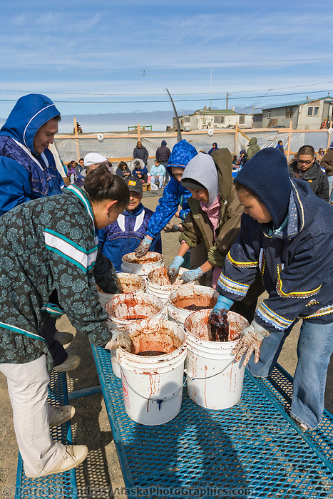 Nalukataq festival, celebrating the successful subsistence spring Bowhead whale hunt, Utqiagvik (Barrow), Alaska.