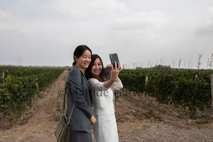 China - Ningxia - Hong Kong VIP visitors taking a selfie in the vineyard of Copower Jade during the opening of the Chateau. The grand opening of the Chateau Copower Jade, on the outskirts of Yinchuan. The 80-hectare-vineyard and the winery's modern structure cost 19 million euros and won the 2018 RVF Wine Design Award.