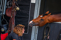 Stable antics with the stars: Margaux Rampnoux and Check In II. 2019 NED-FEI Olympic Qualifier for Team Jumping - Group G. Topps International Arena. Valkenswaard. Netherlands. Monday 12 August. Copyright Photo: Libby Law Photography