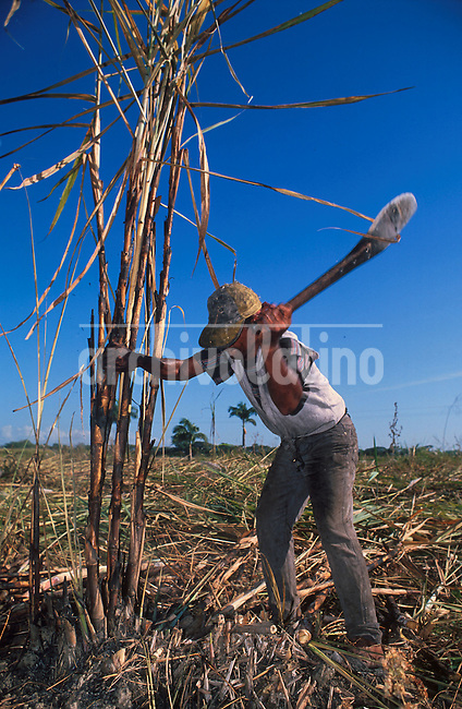 Cosecha de caña de azucar en el Estado Portuguesa en la region central del pais.+ agricultura, campo, economia, trabajador, campesino  *Sugar cane plantation in Portuguesa  state in the central region of the country +economy, farm, ranch, agriculture *Coupe de cannes à sucres dans la ville de portuguesa. +agriculture, campagne, travail, commerce, économie, paysan, exportations, alcools