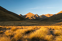 Lindis Pass sidelit hills and tussock grass at sunset in Central Otago, New Zealand