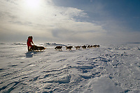 Susan Butcher on Norton Sound Near Elim Checkpoint during 1991 Iditarod Sled Dog Race Alaska