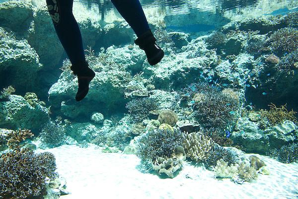 """A diver cleans a tank at """"The Sea Of Tropical Fish"""" display at the Okinawa Churaumi Aquarium at Ocean Expo Park."""