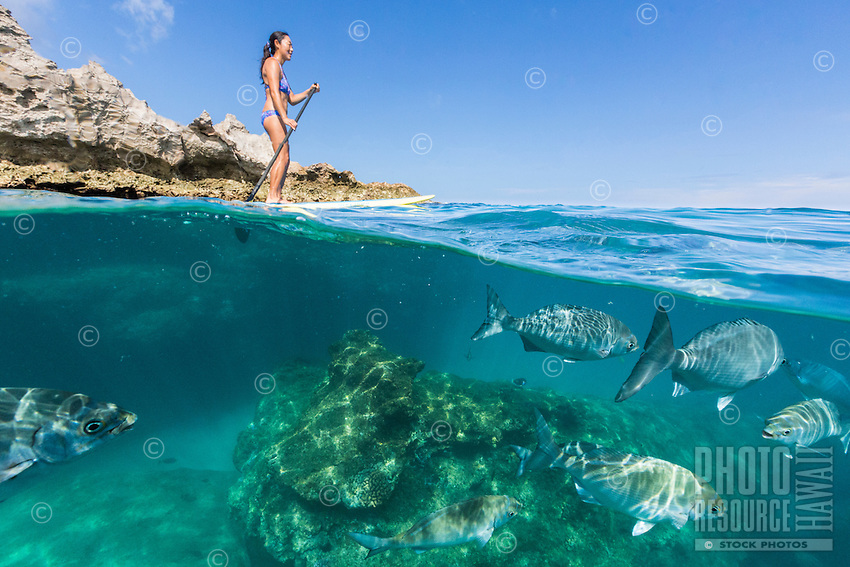 A woman standup paddles while surrounded by tropical fish at Shark's Cove, North Shore, O'ahu.