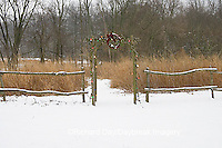 63821-19316 Rustic fence and arbor with holiday wreath & lights near prairie in winter, Marion Co.  IL