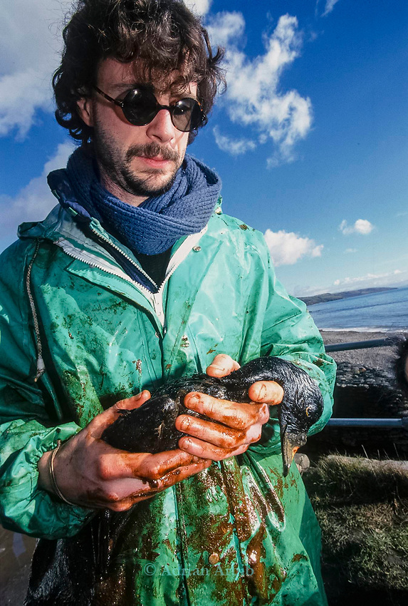 A Scooter duck killed by oil following the 72,000 tonne  oil  spill on the Pembrokeshire coast from the Sea Empress oil tanker. <br /> 1996