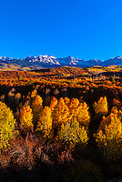 Fall color, Dallas Divide (Sneffels Range in background), near Ridgway, Colorado USA.