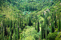 Cyressa or Cypress trees of  Mount Ainos, Kefalonia, Ionian Islands, Greece.