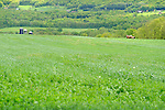 Amishman and team of horses mowing spring ryegrass crop. Nippenose Valeey, PA.