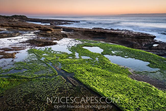 Limestone rocks with water pools and green seaweed on Truman Track under sunset in Punakaiki, Paparoa National Park, West Coast, New Zealand