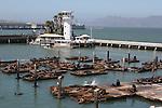 Pier 39 CA sea lions