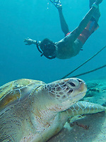 TAE-Turtle Beach Taxi Max Curacao Tour - as part of HAL Koningsdam S. Caribbean Cruise, Curacao 3 19