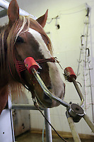 RUMAENIEN, 02.2006, Miercurea-Ciuc. Pferde-Schlachthof: Elektroschockzange fuer das Toeten. Pferde werden bis heute als Nutz- und Zugtiere eingesetzt. | Horse slaughter house: Electro shock pliers for killing. Horses are until today used as productive livestock for work and cart-pulling..© Andreea Tanase/EST&OST.