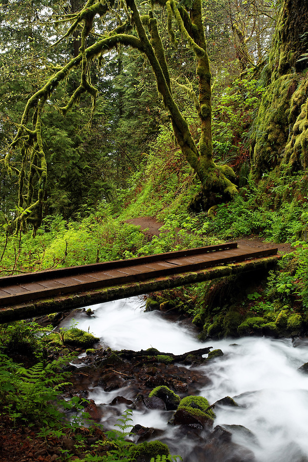 Footbridge over Wahkeena Creek, Columbia River Gorge National Scenic Area, Oregon, USA