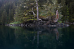 Alaska, Old growth forest, coastline, Prince William Sound, Esther Passage, Coastal temperate rain forest,
