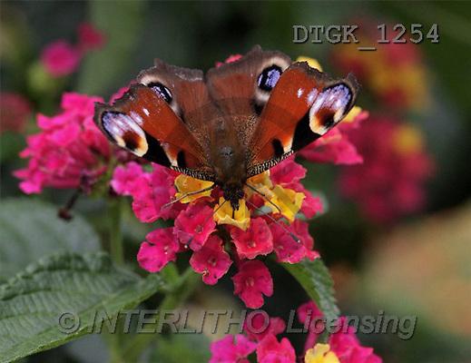 Gisela, FLOWERS, photos(DTGK1254,#F#) Blumen, flores, retrato