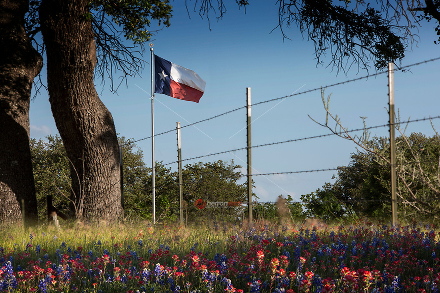 Texas flag flies in the breeze surrounded by a field of Bluebonnet and Indian Paintbrush wild flowers in the Texas Hill Country. Spring time wildflower bliss.