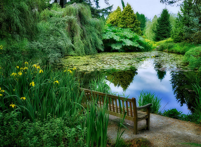 Bench at pond with yellow iris. VanDusen Botanical Garden. Vancouver, BC