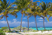 Anegada, British Virgin Islands, Caribbean<br /> A line of palm trees on the edge of a white sand beach at Cow Wreck Bay