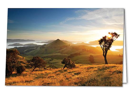 New Zealand landscape images  on professionally printed gift cards. This card - the sun rises through a cabbage tree on Otago Peninsula, Dunedin NZ.