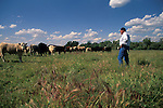 Ed Carroll and cattle in spring pasture grasslands at Kaweah Oaks Preserve, near Visalia, Tulare County, California