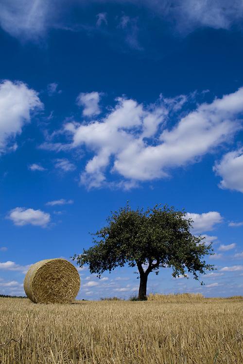 Europa, DEU, Deutschland, Rheinland Pfalz, Rhein-Lahn Kreis, Altendiez, Agrarlandschaft im Sommer, Feld, Acker, Getreidefeld nach der Ernte, Strohballen, Wolken, Cumuluswolken, Baum, Apfelbaum, Kategorien und Themen, Landwirtschaft, Landwirtschaftlich, Agrar, Agrarwirtschaft, Erzeugung, Landwirtschaftliche Produkte, Wetter, Himmel, Wolken, Wolkenkunde, Wetterbeobachtung, Wetterelemente, Wetterlage, Wetterkunde, Witterung, Witterungsbedingungen, Wettererscheinungen, Meteorologie, Bauernregeln, Wettervorhersage, Wolkenfotografie, Wetterphaenomene, Wolkenklassifikation, Wolkenbilder, Wolkenfoto....[Fuer die Nutzung gelten die jeweils gueltigen Allgemeinen Liefer-und Geschaeftsbedingungen. Nutzung nur gegen Verwendungsmeldung und Nachweis. Download der AGB unter http://www.image-box.com oder werden auf Anfrage zugesendet. Freigabe ist vorher erforderlich. Jede Nutzung des Fotos ist honorarpflichtig gemaess derzeit gueltiger MFM Liste - Kontakt, Uwe Schmid-Fotografie, Duisburg, Tel. (+49).2065.677997, ..archiv@image-box.com, www.image-box.com]