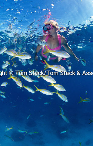 Snorkeling Alligator Reef, Fl Keys Nat. Marine Sanct.