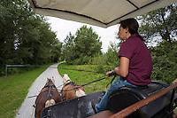 France, Aquitaine, Pyrénées-Atlantiques, Béarn, Pau: Haras National de Gelos , promenade en calèche //  France, Pyrenees Atlantiques, Bearn, Pau, National stud farms of Pau Gelos: carriage ride<br /> [Autorisation N° : 2014-162]