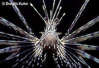 TP03-005z   Lionfish - Turkeyfish or Volitans - Pterois volitans