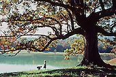 Children playing by lake and big tree