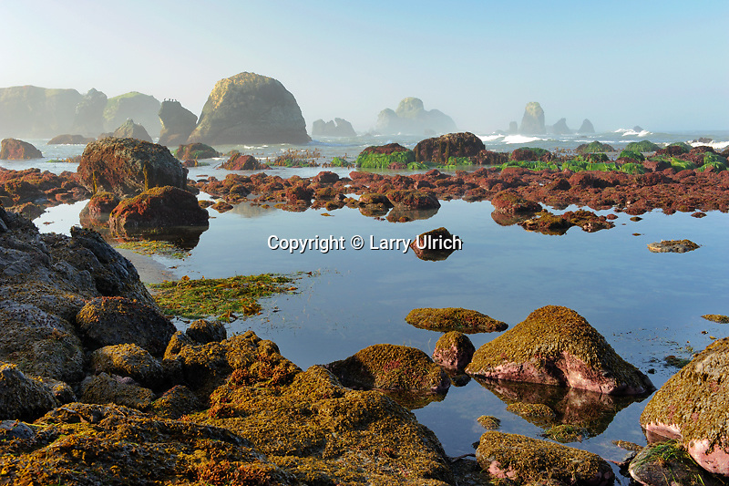 Minus tide and Camel Rocks<br />